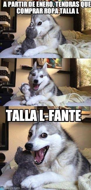 Recopilacion De Memes Del Perro Husky Memes De Animales Divertidos Humor Divertido Sobre Animales Memes Divertidos