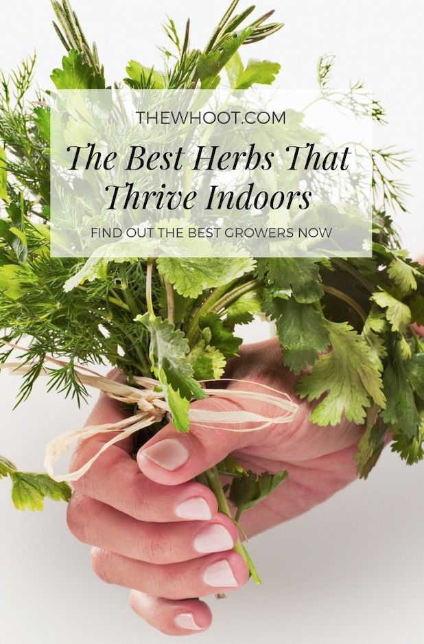 Best Herbs To Grow Indoors From Seeds Video Tutorial 400 x 300