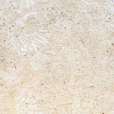 coquina stone coral stone tiles by