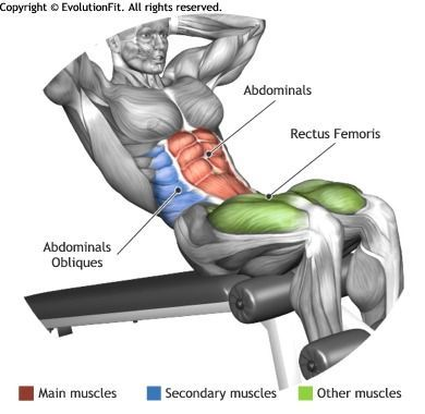 Abdominals Decline Crunch Ab Exercises And Workouts