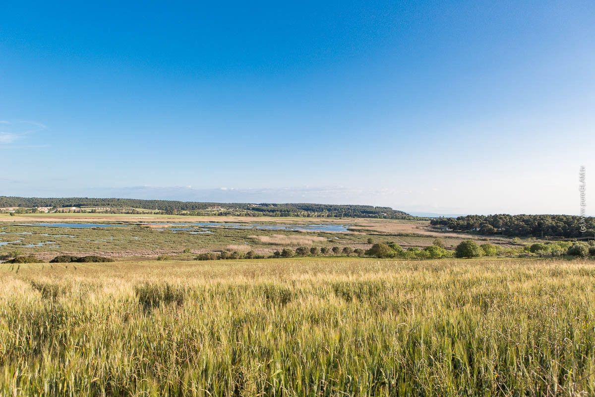 Wetlands and Birdwatching – SaniGreen / Eco-Tourismus - Griechenland – Sani Resort - Greece - Europe - #Greece #Griechenland #Natur #Eco #Wetlands #Europe