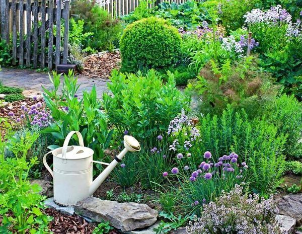 Картинки по запросу пряная грядка в саду