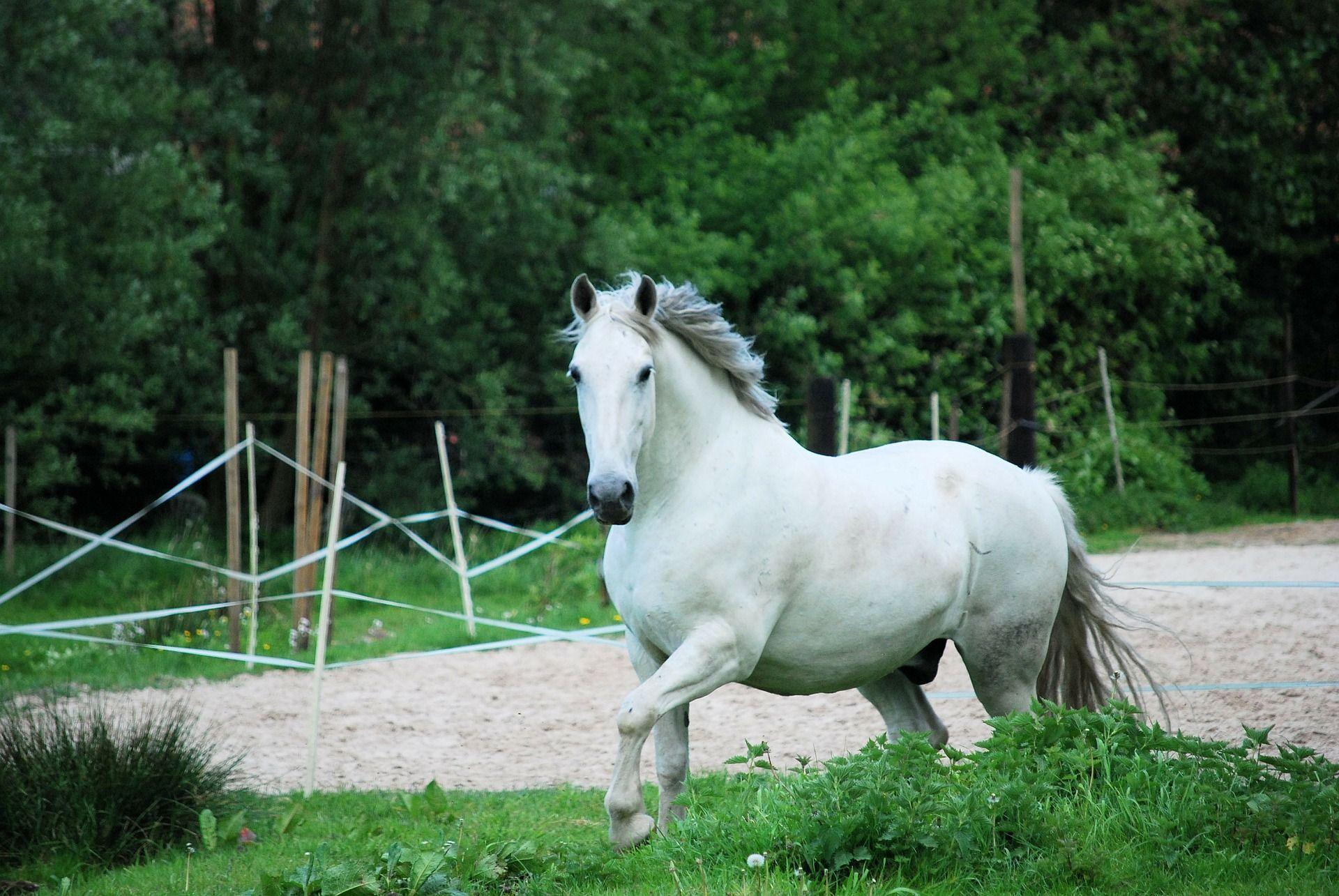 White Horses Running Through Water Or Sea White Horses Horses White Horses Running