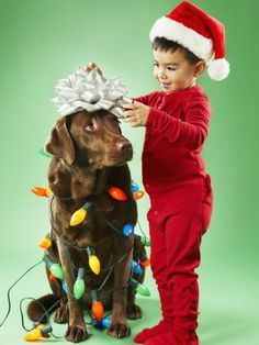 Christmas Pictures With Family And Dogs