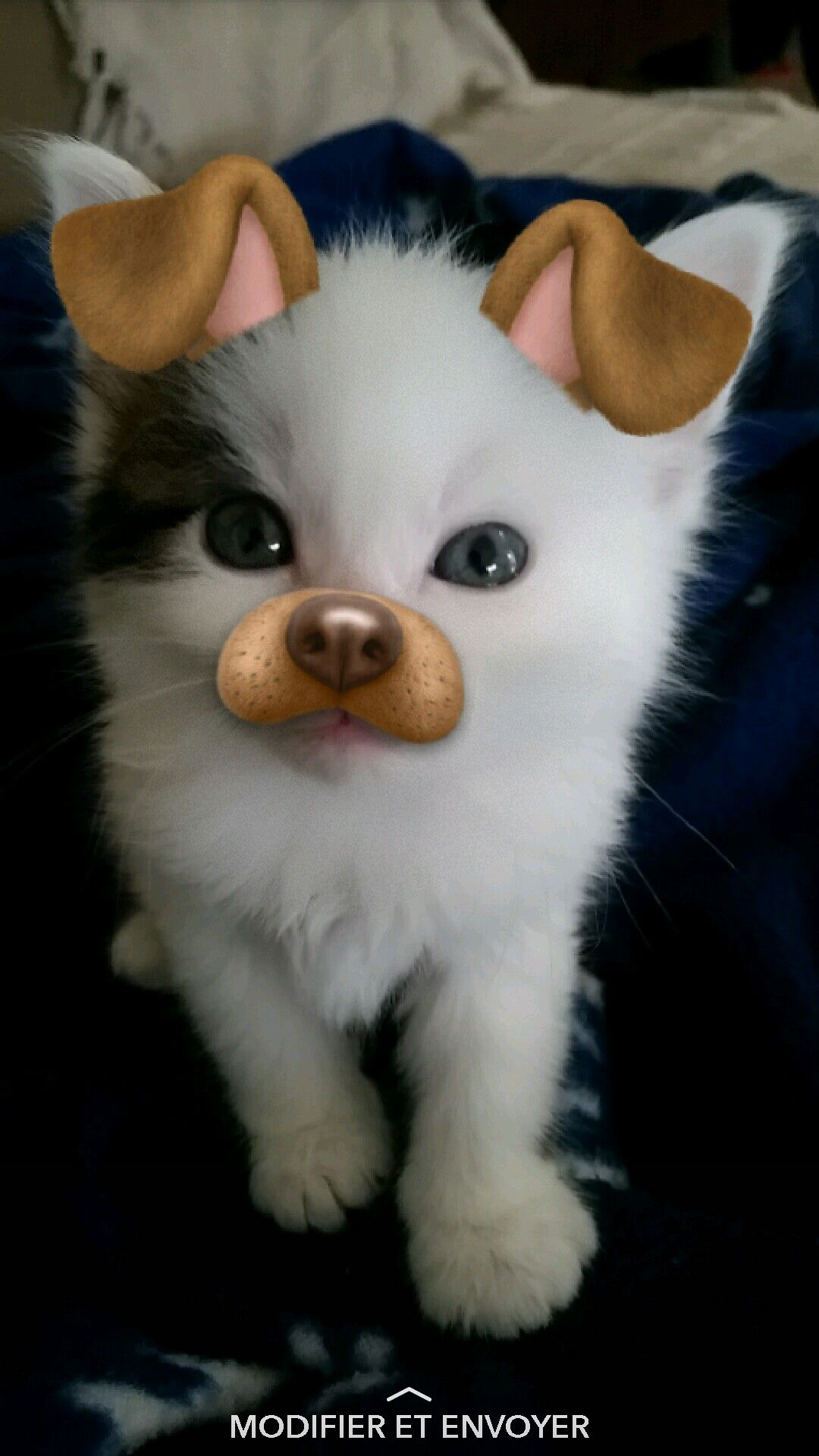 Snapchat Chat Mignon Filtre Chien Love Chaton Mignon Chat
