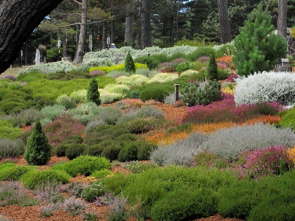 Hillside Planting Landscape Contemporary With Seaside Heather Garden Low Maintenance Color Low Maintenance Color Heather Gardens Conifers Garden Landscaping Shrubs