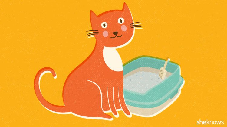A cat lover's guide to a clean and odor-free litter box.    Really Works