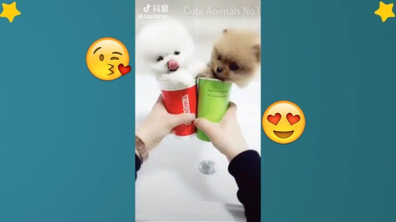 Tiktok Cat Tik Tok Pets Tik Tok Funny Dog Tik Tok Animals 13 Cutecats Cutedogs Cuteanimals Adorabl Funny Dogs Cute Animal Videos Cute Funny Animals