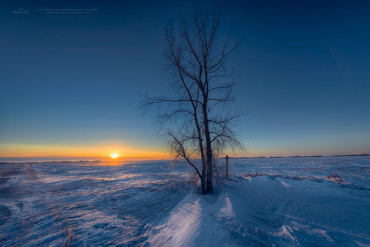 Winter Tree 102014 by Ian McGregor on 500px