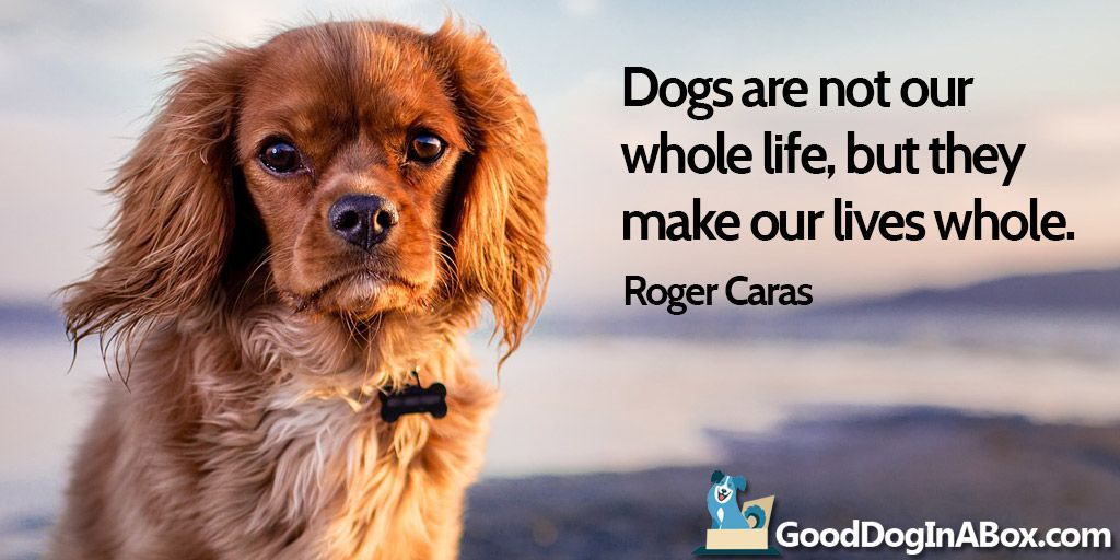 Dogma Dog Love Quotes Inspirationaldogquotes