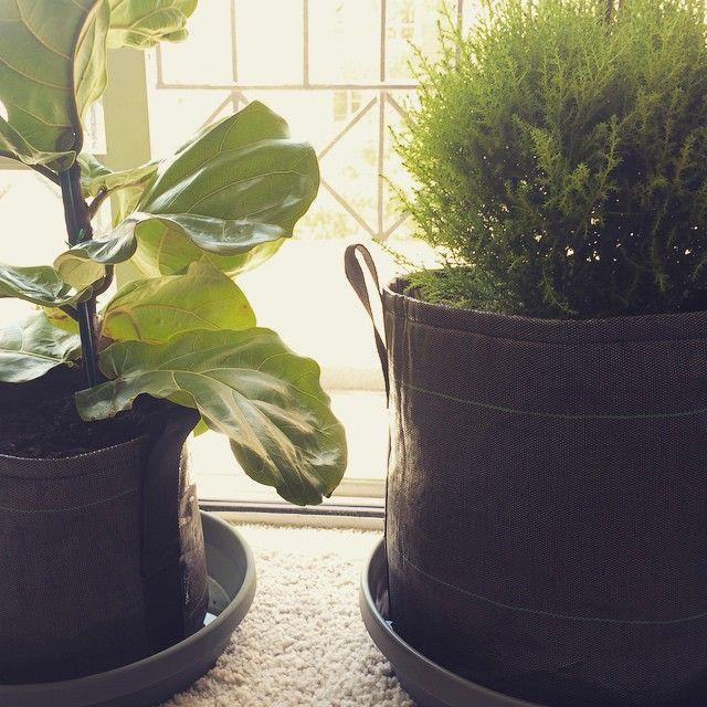 Des Pots En Geotextile 3l Et 10l En Interieur Avec Une Soucoupe