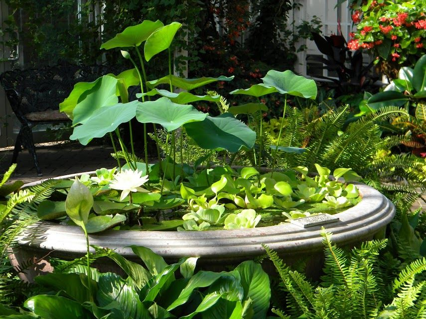 pin by v ronique maton on b ton plante d eau fontaine. Black Bedroom Furniture Sets. Home Design Ideas