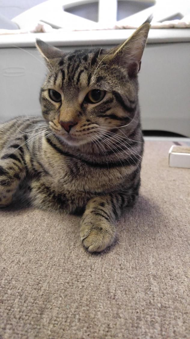 Adopt Jasper On Petfinder Animal Shelter Dog Cat Cats