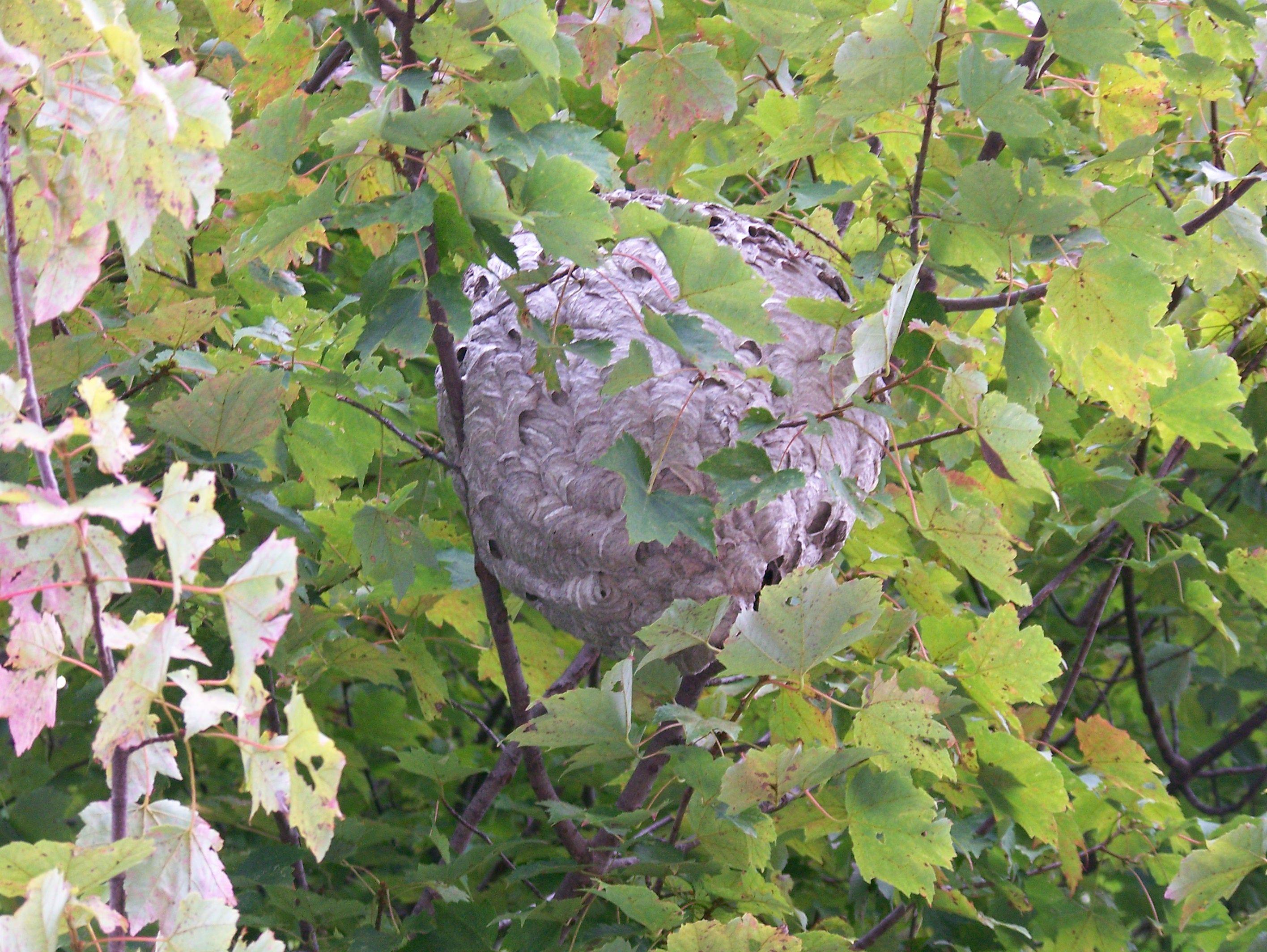 2007 bee's nest