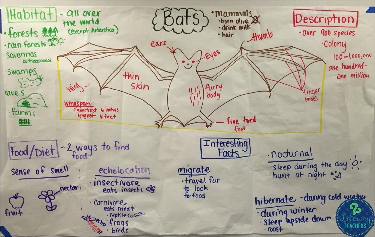 Going Batty By 2 Literacy Teachers