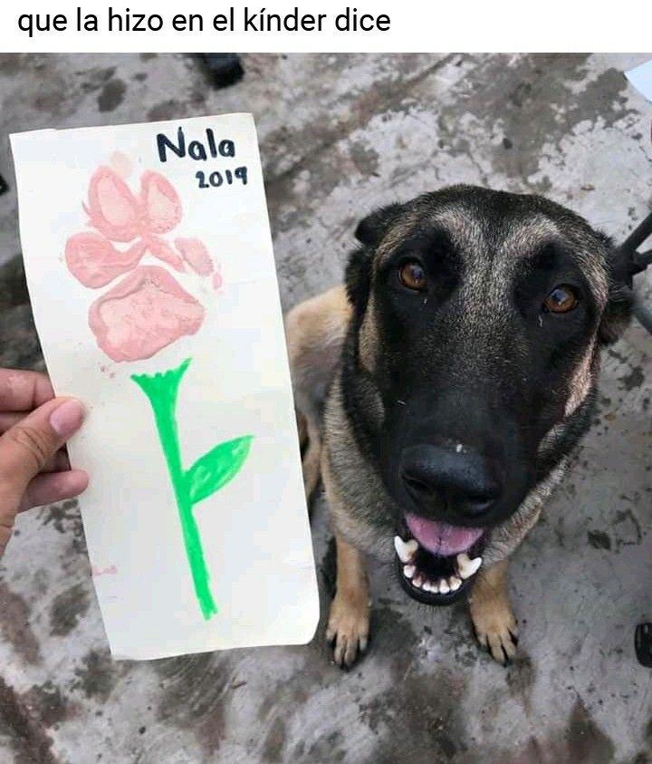 Pin De Jimena Vasquez En Memes Xd En 2020 Mascotas Memes Memes De Perros Chistosos Memes Perros