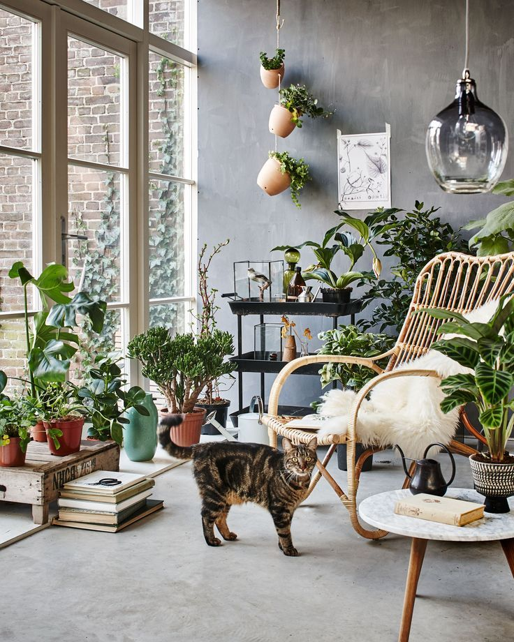 Botanic Living Room / Orangery With A Rattan Chair, Plants, Flowers And A  Cat