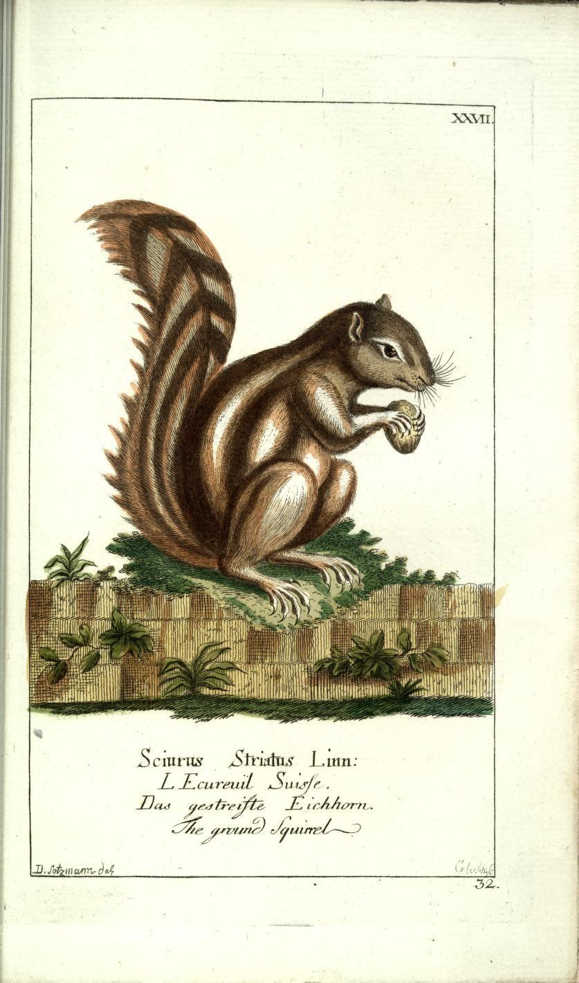 Bd 1 plates (1780) - Gemeinnüzzige Naturgeschichte des Thierreichs : - Biodiversity Heritage Library