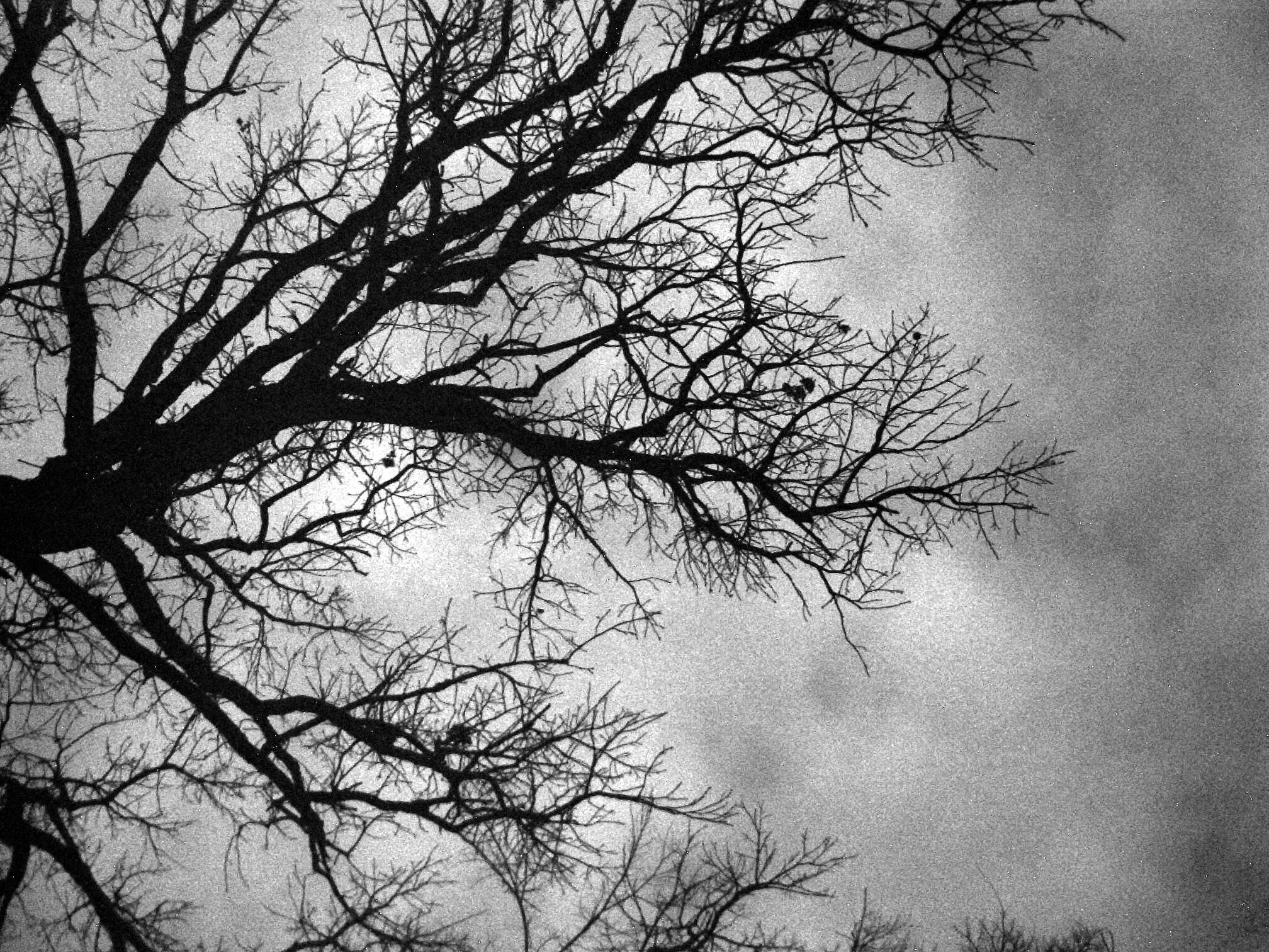 Black And White Images Of Trees 28 Free Hd Wallpaper