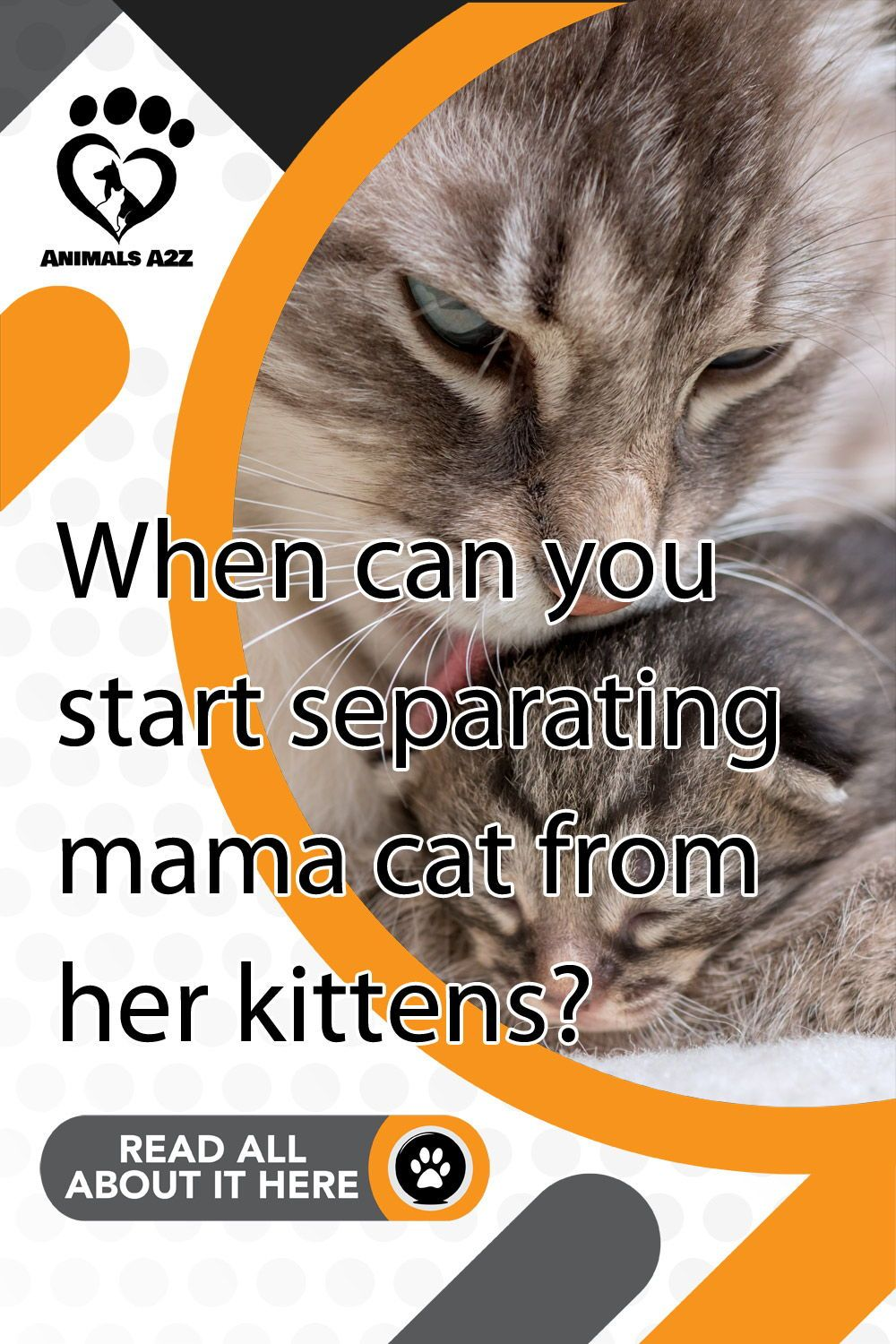 When Can You Start Separating Mama Cat From Her Kittens In 2020 Mama Cat Kittens 12 Week Old Kitten