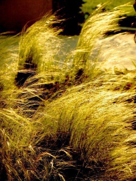 Grasses in the Wind.   Movement - unplugged
