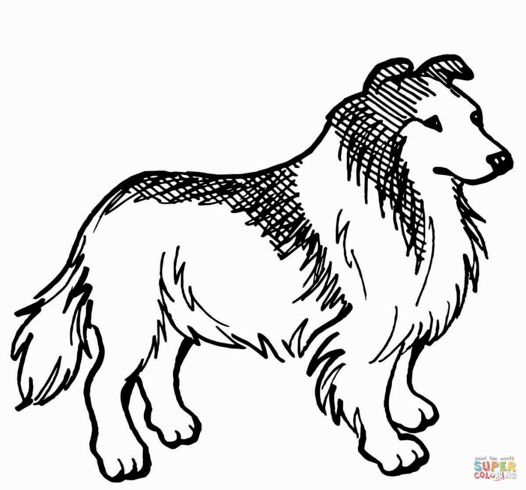 Border Collie Coloring Page Border Collie Colors Dog Coloring Page