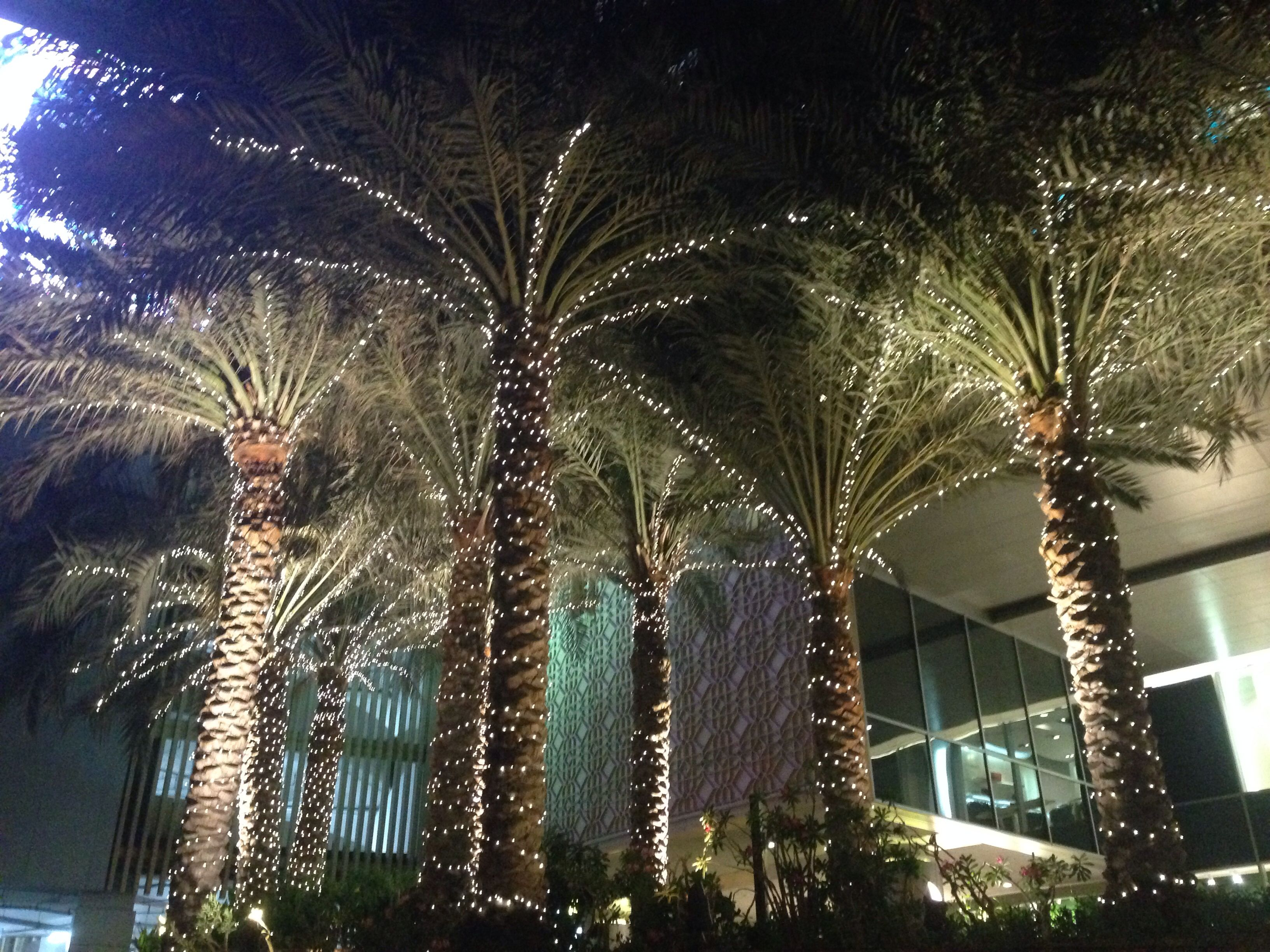Palm trees lit up