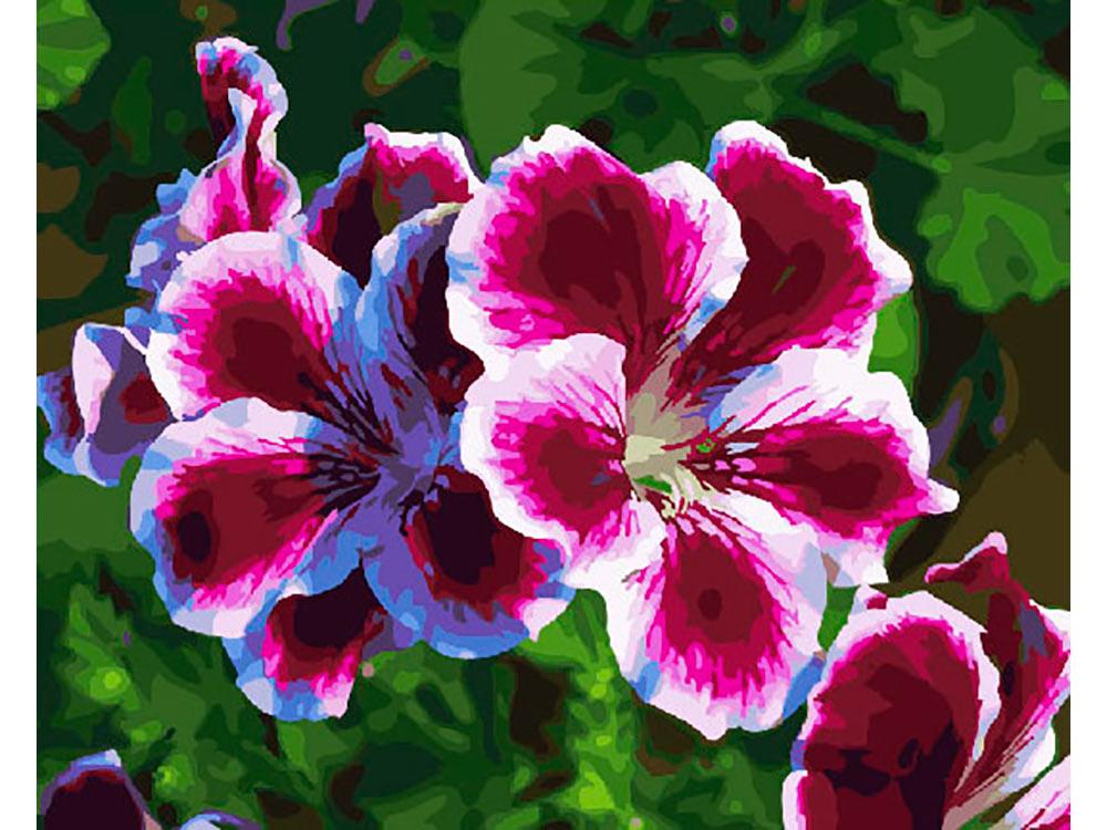Картина по номерам «Пеларгония» | Картины, Цветы, Номера