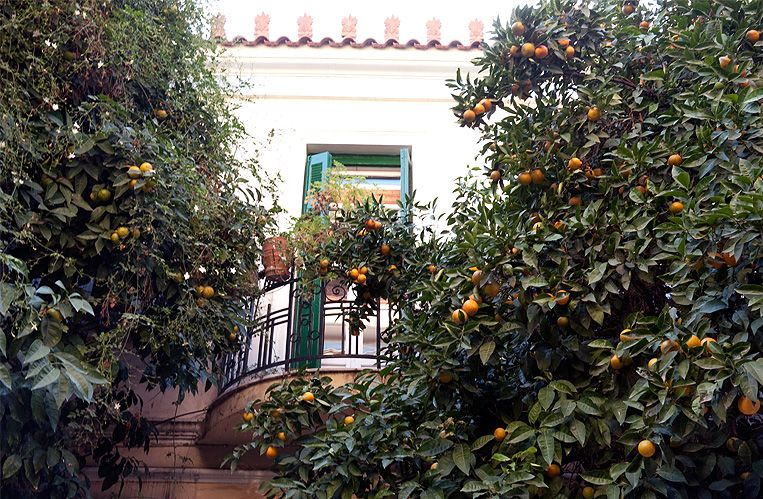 Bitter orange and lemon trees lining the streets of Athens