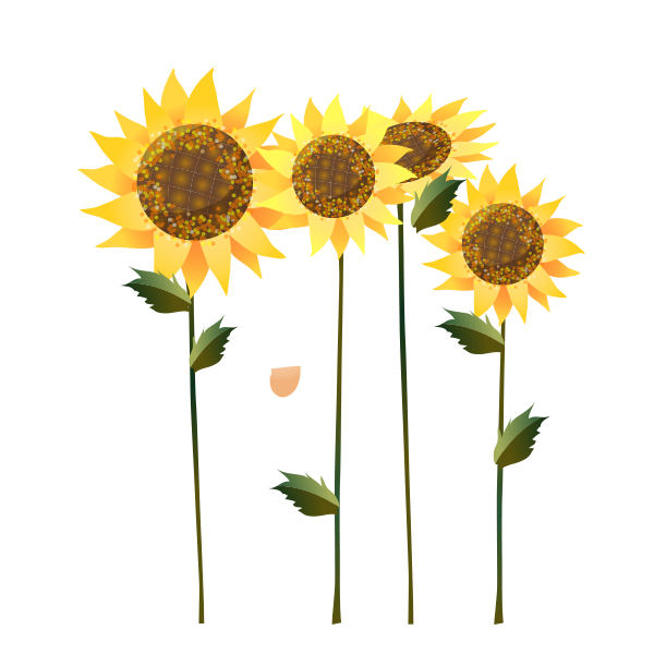 Sunflowers Icon Beautiful Pictures Of Sunflower Sunflower Png Sunflower Beautiful Pictures