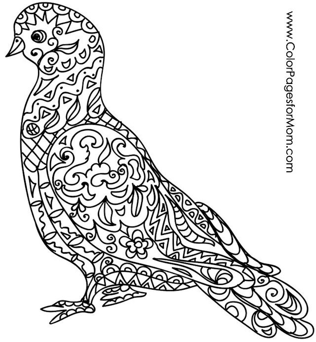animal bird coloring page 56