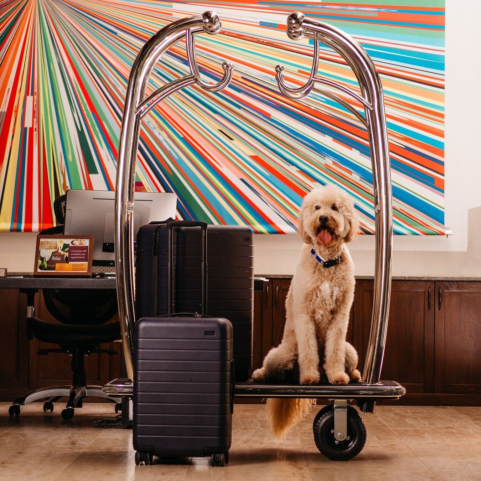 Top 10 Dog Friendly Things To Do In Palm Springs Ca Dogfriendly California Palmsprings Dog Friendly Vacation Dog Friendly Cities Pet Travel