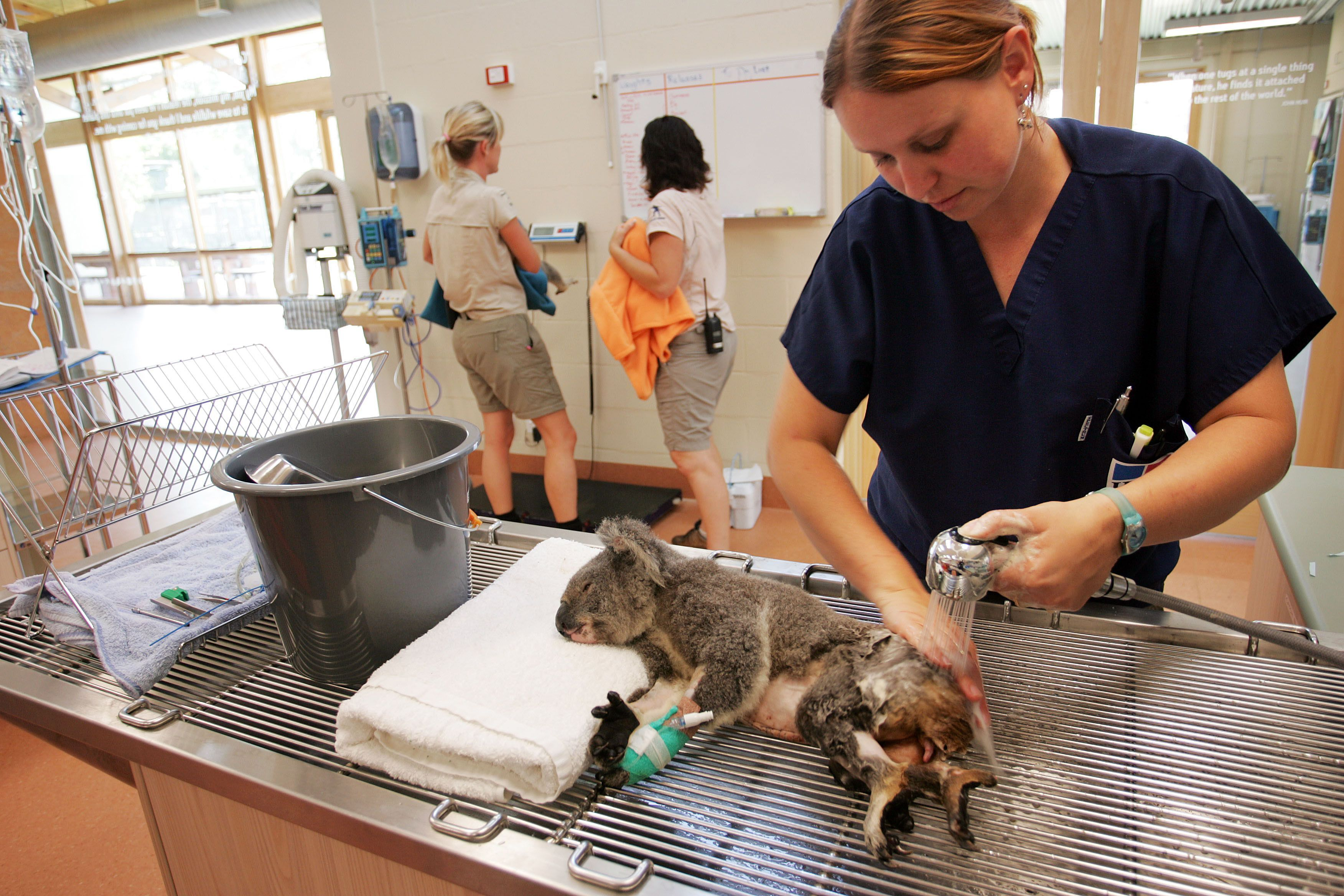 What Is A Zoo Veterinary Technician