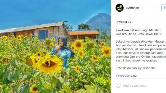 Kebun Bunga Matahari Pandaan