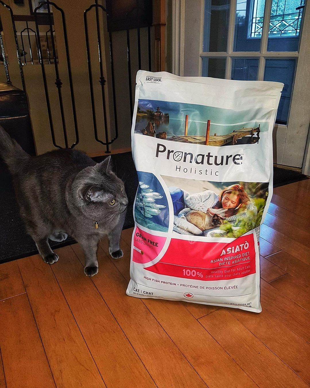 Milo Always Double Checks The Bag To Make Sure I Didn T Leave Anything Behind Pronature Canada Cat Cats Catproducts Catfood Catsofinstagram Catractive