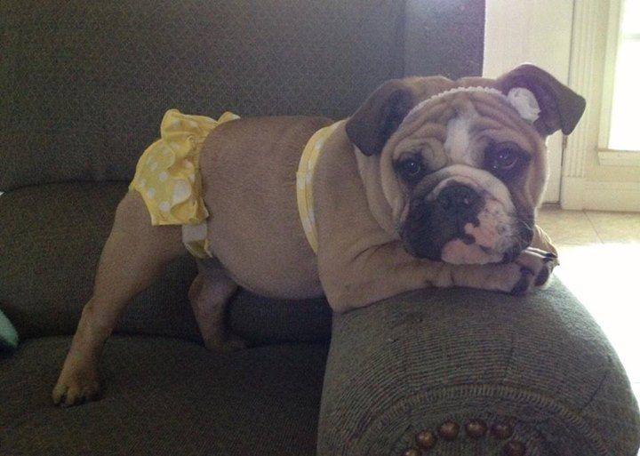 Bulldogs Image By C Sta Jewelry Bulldog Puppies English