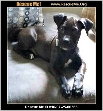 Indiana Dog Rescue Adoptions Rescueme Org With Images