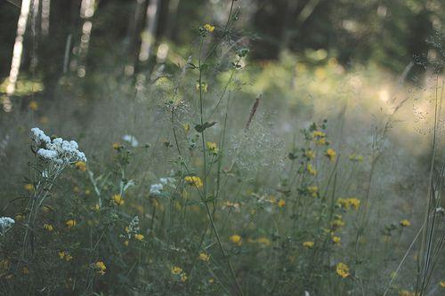 Wildflowers II by B.S.H., via Flickr