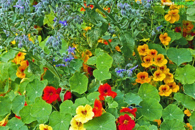 ernten statt j ten essbare bodendecker zur unkrautbek mpfung garten nutzgarten pl ne. Black Bedroom Furniture Sets. Home Design Ideas