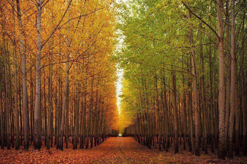 Boardman Tree Farm in Oregon via /r/trees https://t.co/2jxvR0fAFx https://t.co/HOkMwnF85O