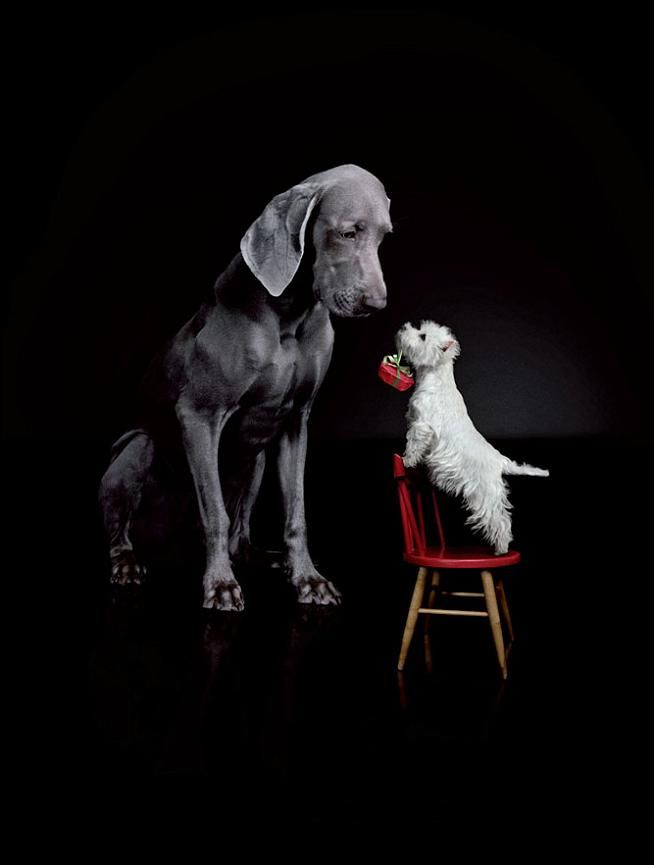 #bigdog #littledog
