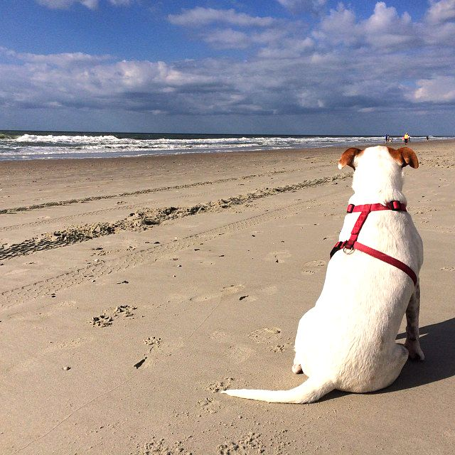 Myrtle Beach South Carolina Man S Best Friend Also Enjoys The View Click On The Pin For Myrtle Beach Myrtle Beach Hotels Pet Friendly Hotels