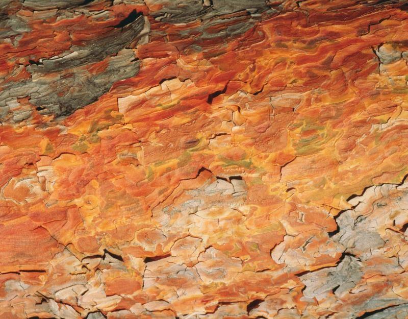 Pycnogenol vs. Pine Bark Extract