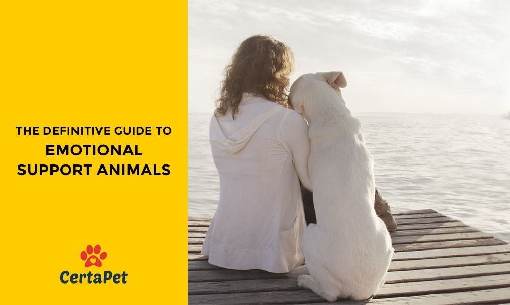 How to Get a Legitimate Emotional Support Animal (or ESA