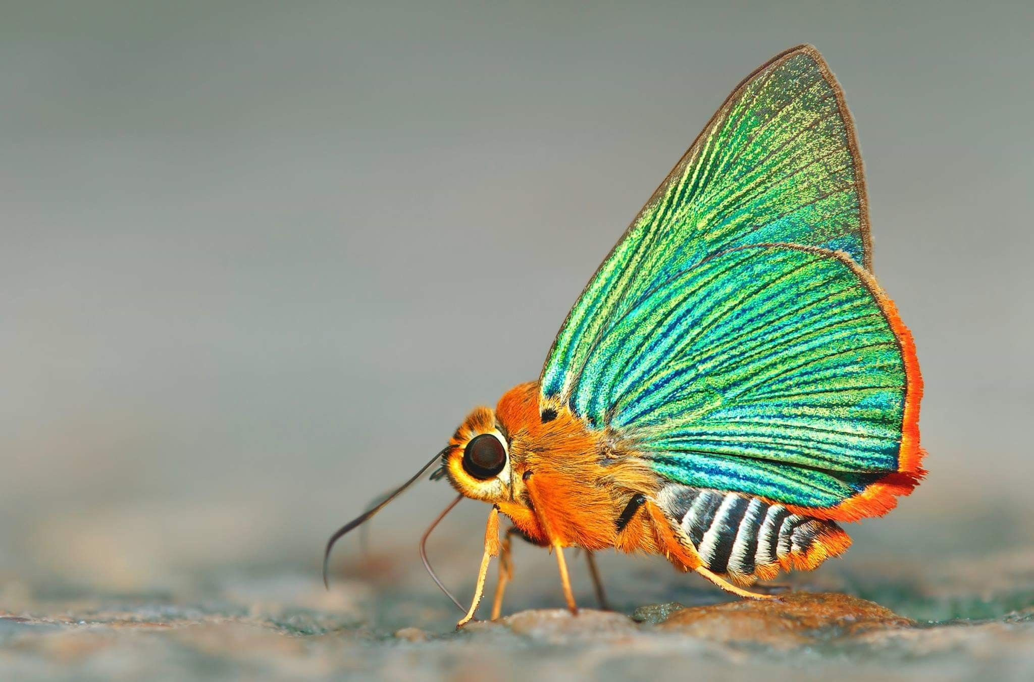 Pin By Weiden Feder On Butterflies Moths Butterfly Photos Dragonfly Insect Beautiful Butterflies