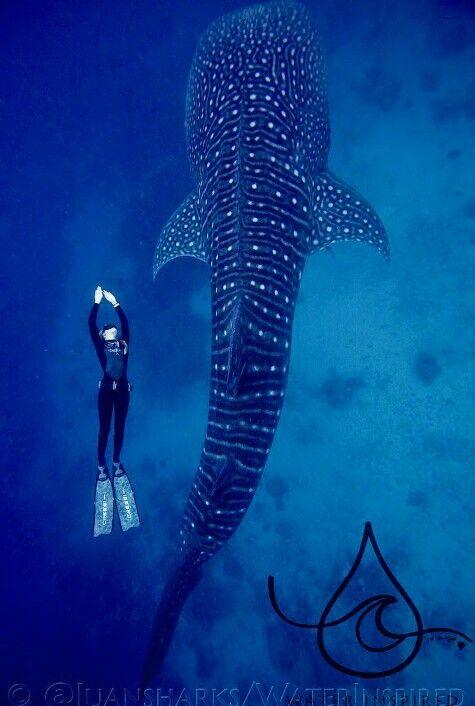 Ocean Ramsey | Underwater | Underwater creatures, Sea ...