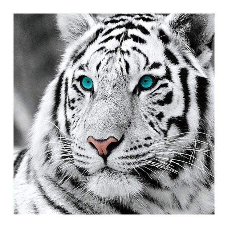 Tigres Broderie Diamant 5d Pour Debutants Kit Broderie Diamants Diamond Painting Qb6431 En 2020 Photo De Tigre Photographie De Lion Tigre Blanc