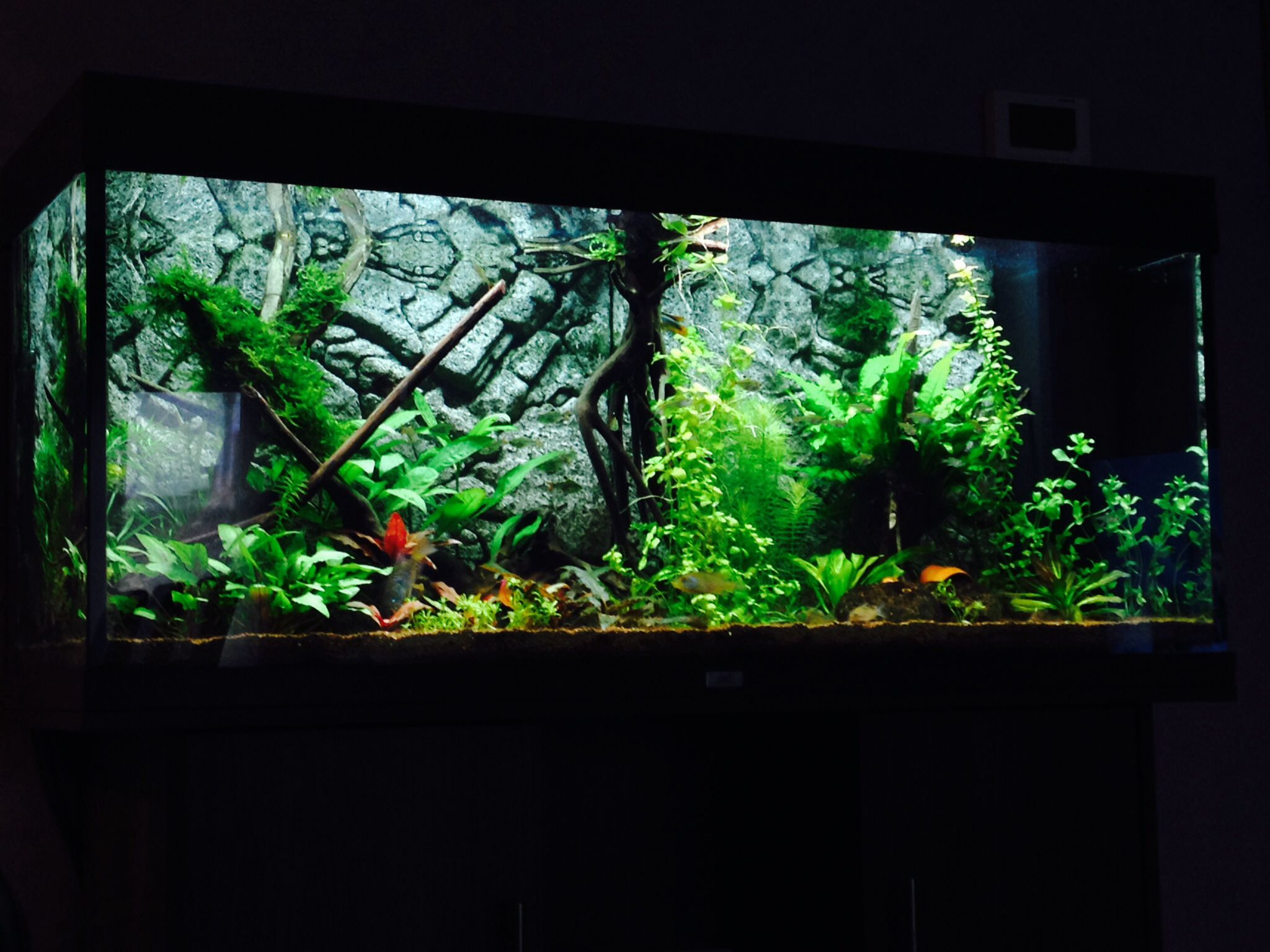 Juwel aqua clean aquarium fish tank gravel - Planted Freshwater Aquarium Juwel Rio