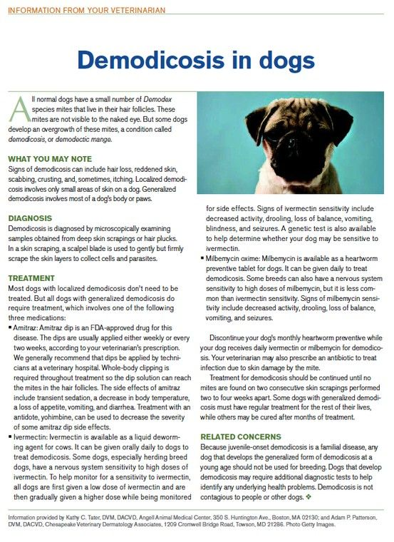 Client Information Demodicosis In Dogs Vet Medicine Medication