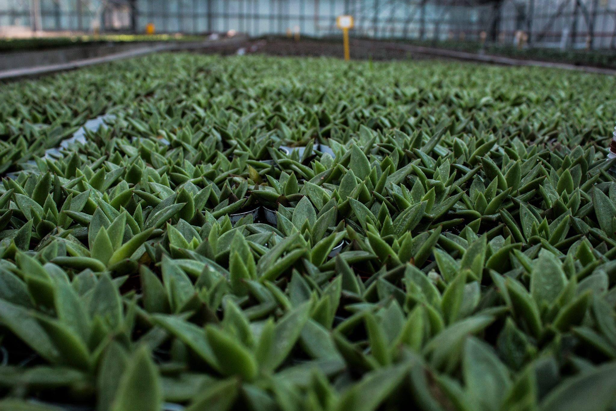 Piante ornamentali distribuzione e vendita di piante verdi for Vendita piante ornamentali